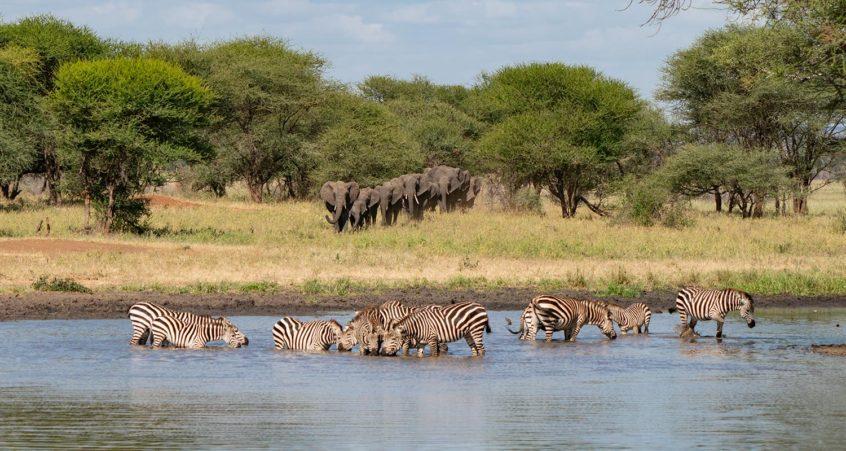 mike jensen photo safari workshop